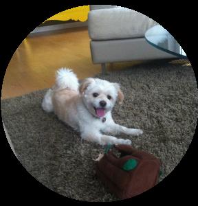 My Dog Bentley | www.4hourbodygirl.com